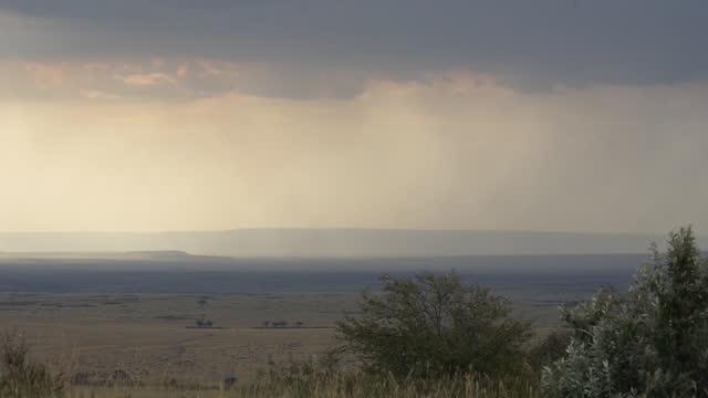 africa - wide grassland - prairie stock videos & royalty-free footage