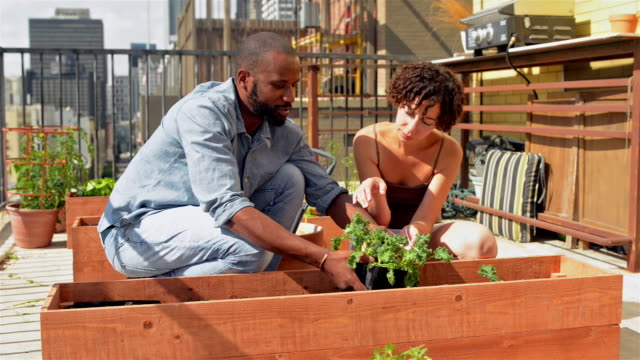 African American couple roof gardening
