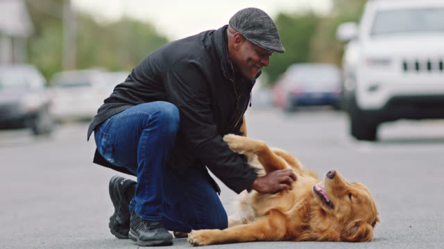 african american man lovingly pets playful dog laying in empty street. - stroking stock videos & royalty-free footage