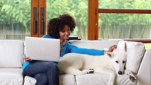 vídeos de stock e filmes b-roll de african american woman sitting on sofa using laptop and petting dog - afro americano