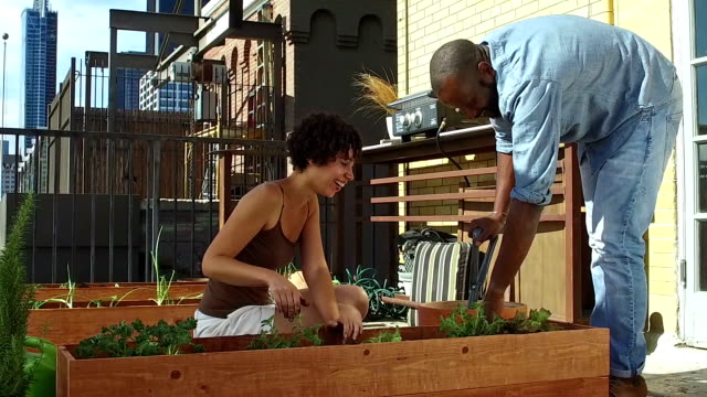 african american young adults roof gardening - vegetable garden stock videos and b-roll footage