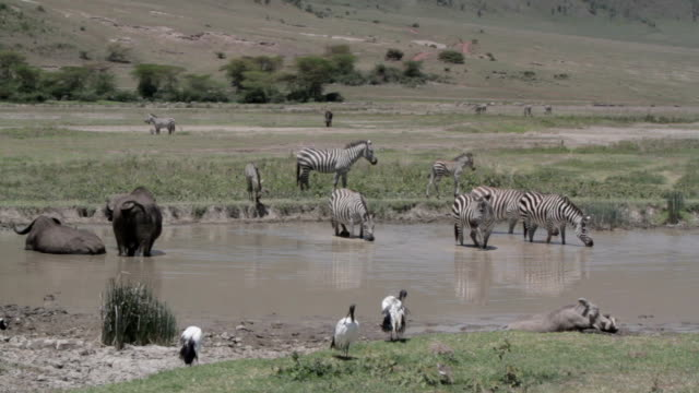 African animals together in a waterhole