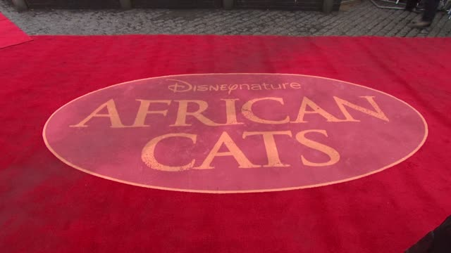 african cats uk premiere at bfi southbank on april 25, 2012 in london, england - bfi southbank stock videos & royalty-free footage