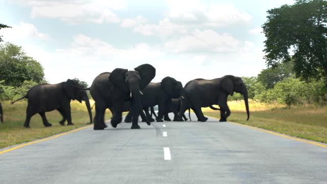 Route de passage famille éléphant d'Afrique