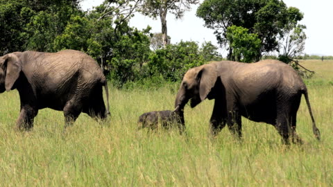 african elephant family - three animals stock videos & royalty-free footage
