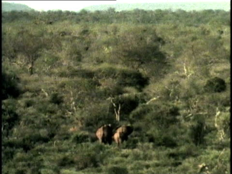 HA, WS, African Elephant (Loxodonta africana) family walking through savanna, Tsavo National Park, Kenya