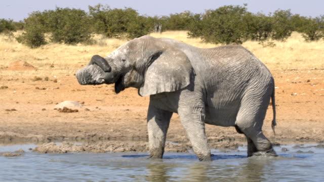African Elephant in Etosha National Park, Namibia