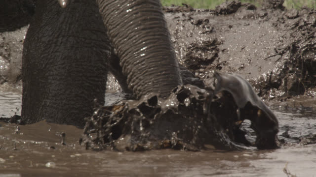 african elephant (loxodonta africana) splashes and bathes in waterhole, kenya - taking a bath stock videos & royalty-free footage