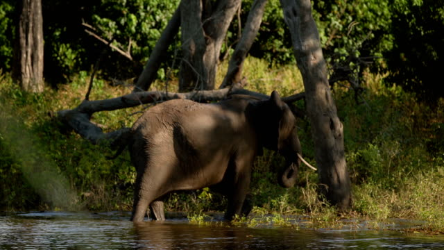 african elephant - wildlife reserve stock videos & royalty-free footage