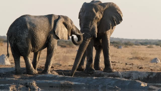 african elephant - tanzania stock videos & royalty-free footage