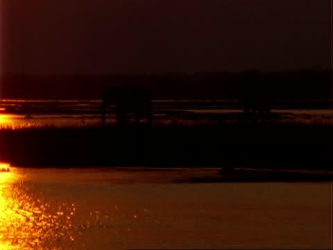 african elephant (loxodonta africana), wa silhouette of two elephants in shallow water at dusk - 厚皮動物点の映像素材/bロール
