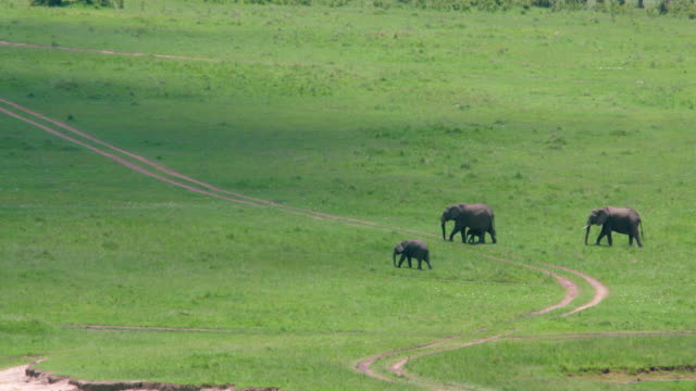 African Elephant Walking In Savannah Maasai Mara, Kenya, Africa