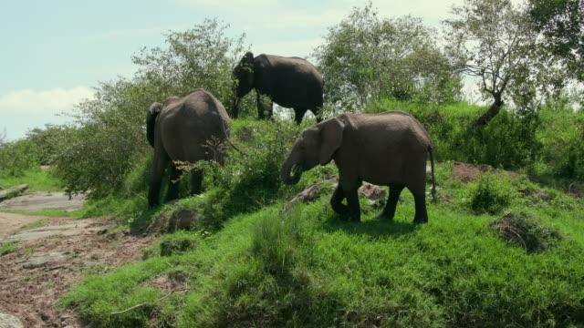 African Elephants On Talek River Bank Maasai Mara, Kenya, Africa
