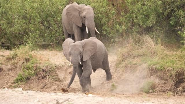 afrikanische elefanten - nationalpark stock-videos und b-roll-filmmaterial