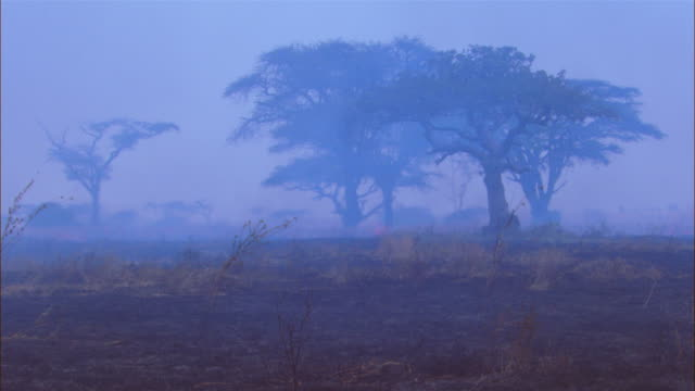 african grass fire with smoke and charred grass with trees in background - grass area stock videos and b-roll footage