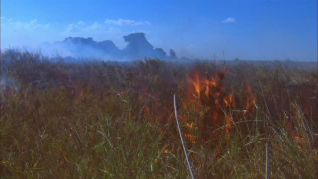 ws african grassland with rocky outcrop and smoke and flames in foreground - outcrop stock videos & royalty-free footage