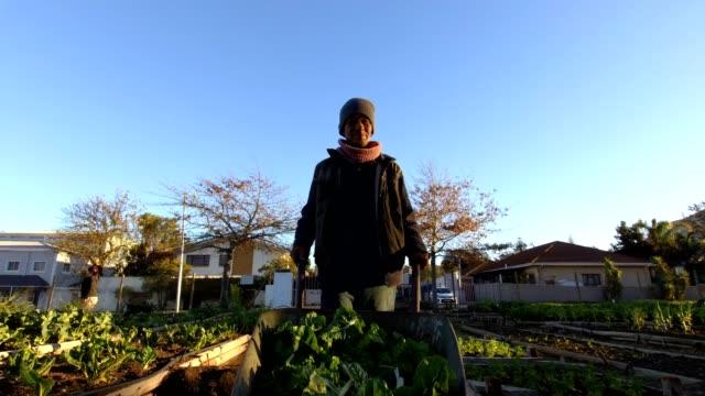 afrikanisches männchen sammelt spinat aus dem gemüsegarten - sozialarbeit stock-videos und b-roll-filmmaterial
