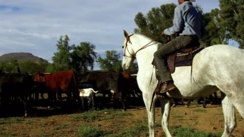 african man on horseback herds his cattle - herding stock videos & royalty-free footage