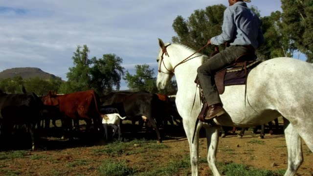 vídeos de stock e filmes b-roll de african man on horseback herds his cattle - pastorear