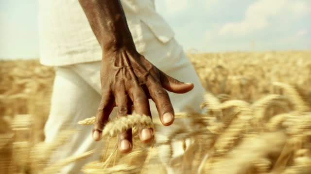 hd slow-motion: african man touching wheat - touching stock videos & royalty-free footage