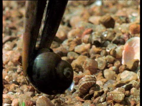 vídeos de stock, filmes e b-roll de african openbill stork delicately and precisely prepares and eats snail. - caracol