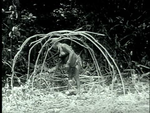 vidéos et rushes de 1939 montage african pygmy woman constructing shelter by interlacing sticks together/ africa/ audio - cabane structure bâtie