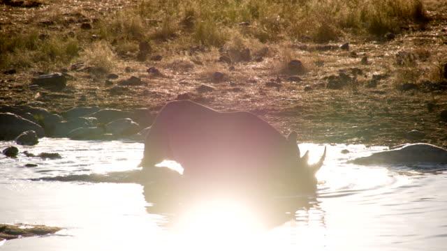 LS African Rhinoceros Taking A Bath