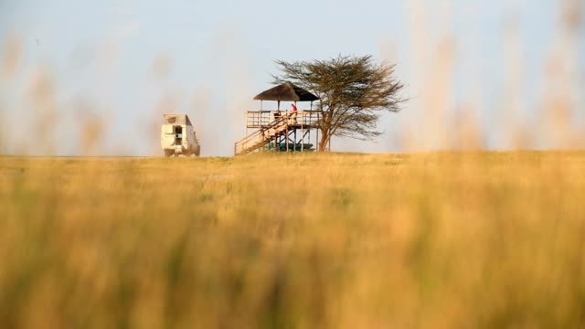 african savannah botswana people camp safari national park - サファリ点の映像素材/bロール