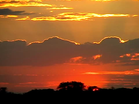 vídeos de stock e filmes b-roll de pôr do sol africano 3 - alto contraste