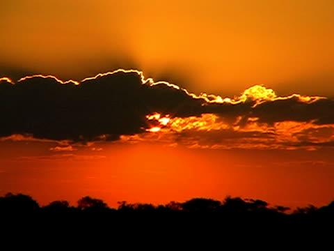 vídeos de stock e filmes b-roll de pôr do sol africano - alto contraste
