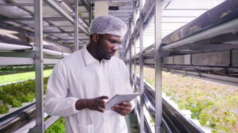 vídeos y material grabado en eventos de stock de agricultor vertical africano examinando el desarrollo de cultivos en interiores - explorar nuevo territorio