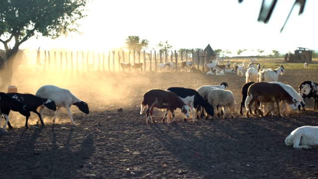 アフリカの村のひんば族 - シェーブルチーズ点の映像素材/bロール
