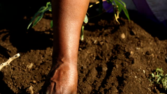 cu african woman's hands working soil, kwazulu natal, south africa - 農林水産関係の職業点の映像素材/bロール