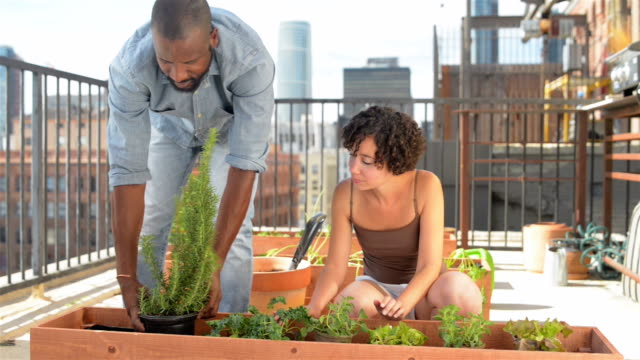African-American couple roof gardening - DOLLY SHOT