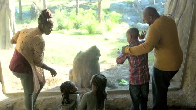 vídeos de stock e filmes b-roll de african-american family of five at the zoo, gorilla - jardim zoológico