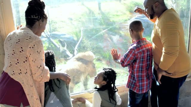 afroamerikanische fünfköpfige familie im zoo, gorilla - 30 39 years stock-videos und b-roll-filmmaterial