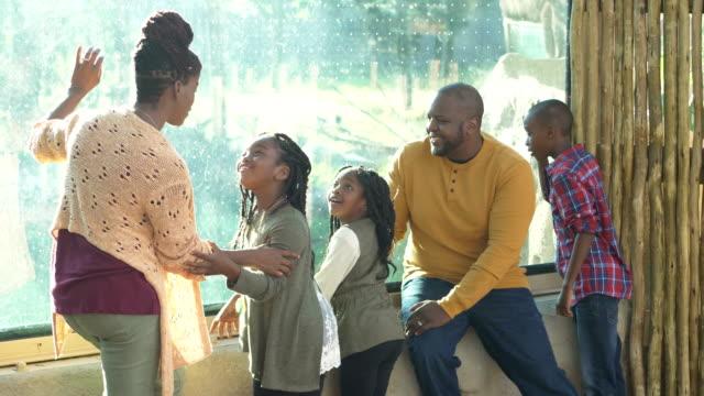 vídeos y material grabado en eventos de stock de familia afroamericana de cinco personas en el zoológico - 30 39 years