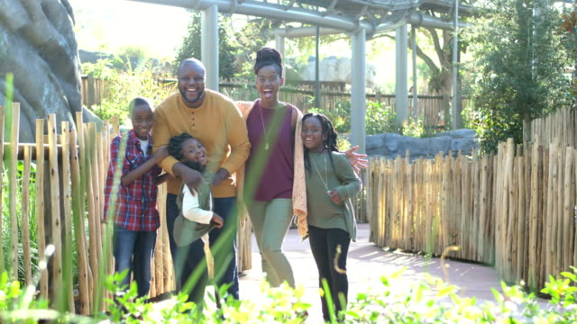 african-american family of five at the zoo - zoo stock videos & royalty-free footage