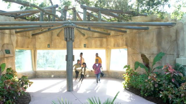 afroamerikanische fünfköpfige familie im zoo - 30 39 years stock-videos und b-roll-filmmaterial