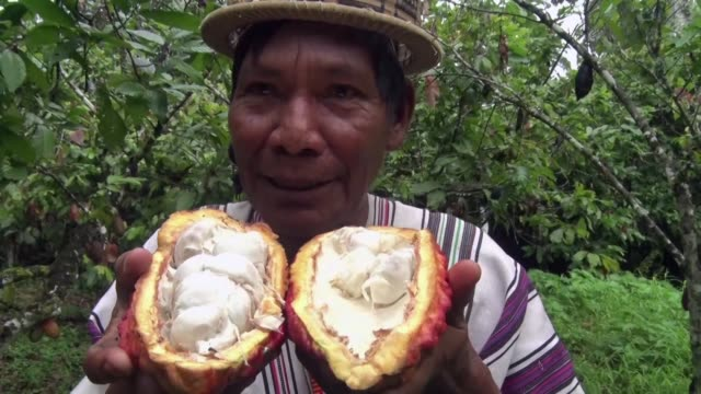 After decades of being dominated by drug trafficking and the remains of the Shining Path guerrillas Peru is trying bit by bit to replace the crops in...