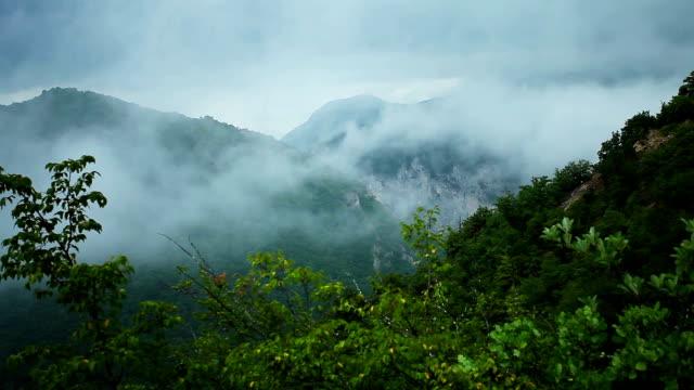 stockvideo's en b-roll-footage met na de regen - tropisch regenwoud