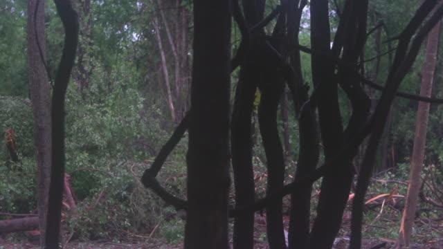 vidéos et rushes de après la dévastation de tornade - accident domestique