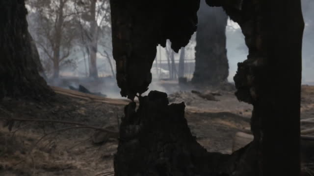 """aftermath of australian bush fires in balmoral village, new south wales, includes firemen and fire engines - """"bbc news"""" stock videos & royalty-free footage"""