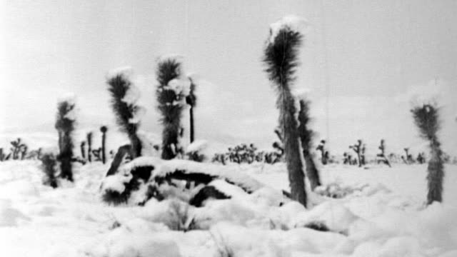 Aftermath of freak ice storm in Mojave Desert / fallen telephone poles / ice and snow on cactus plants 1933