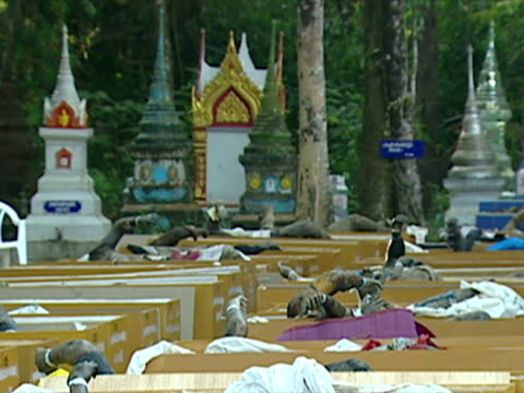 aftermath of thailand tsunami - 2004 indian ocean earthquake and tsunami stock videos & royalty-free footage