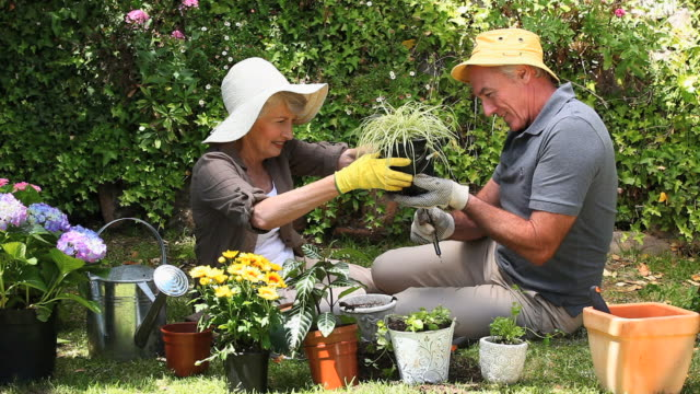 MS Aged couple gardening together in garden / Cape Town, Western Cape, South Africa