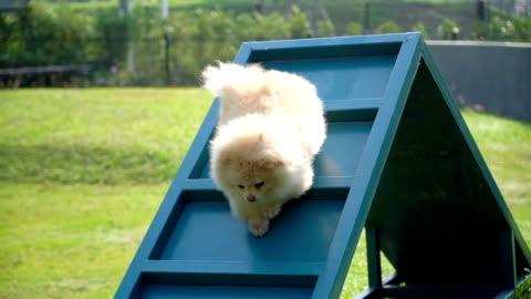 vidéos et rushes de cours de formation de chien agilité - vêtements décontractés