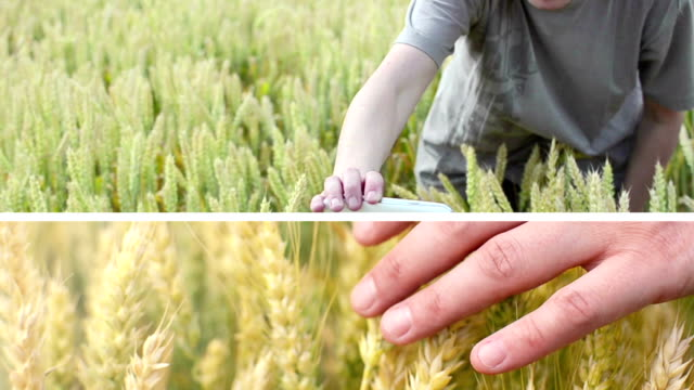 agribusiness. - rice stock videos & royalty-free footage