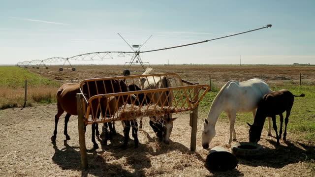 育種レガ ファーム スプリンクラー - agricultura点の映像素材/bロール