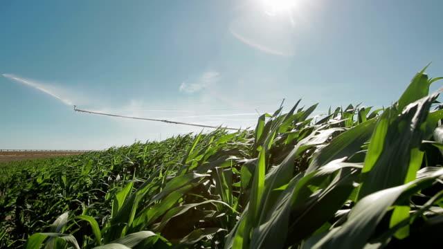 Agricultura rega farm sprinkler